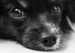 dog-187817_1280