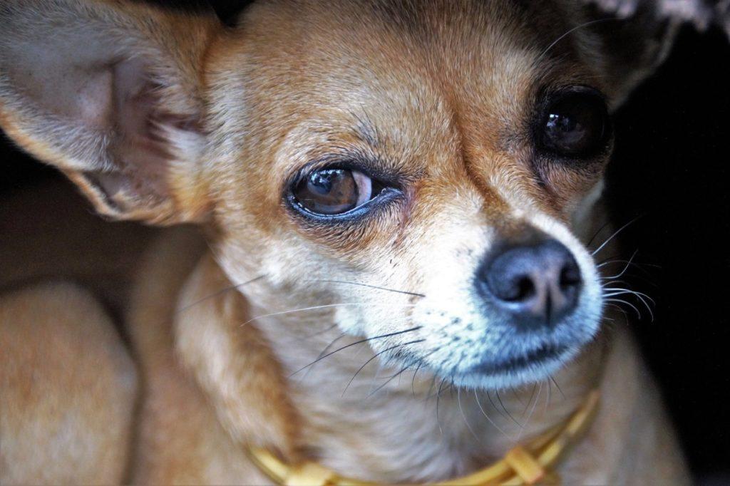 dog-2644997_1920