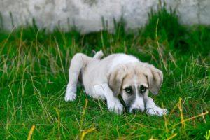 Blutiger Durchfall Tierarztpraxis Blankenese
